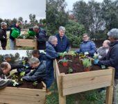 Horticultura collage
